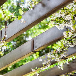Flowery vines wrapping around slatted pergola roof