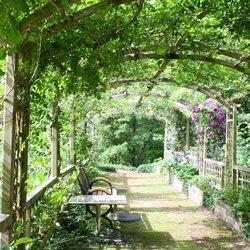 A shady garden archway.