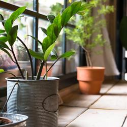 Indoor plants on a window ledge getting sunlight