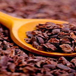 Cocoa nibs in a wooden spoon