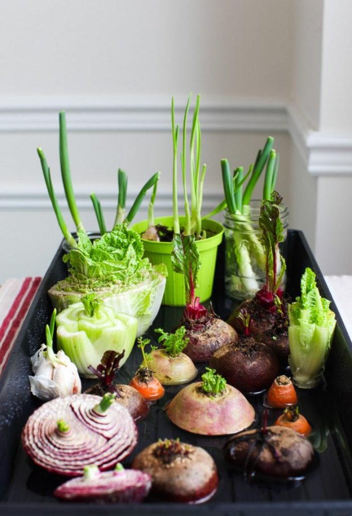 various vegetable scraps growing