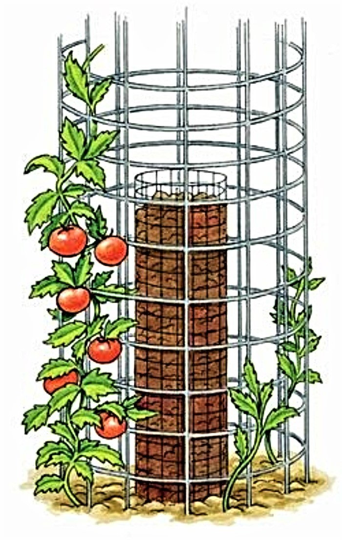 tomato cylinder
