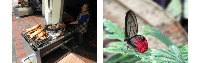 street food and butterfly