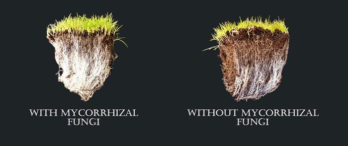 mycorrhizal relationship benefits