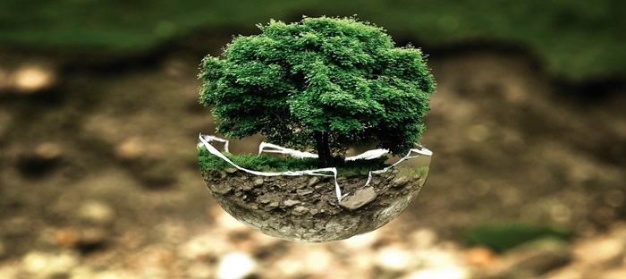 tiny tree in a bowl