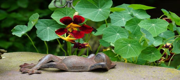 nasturtiums and garden art