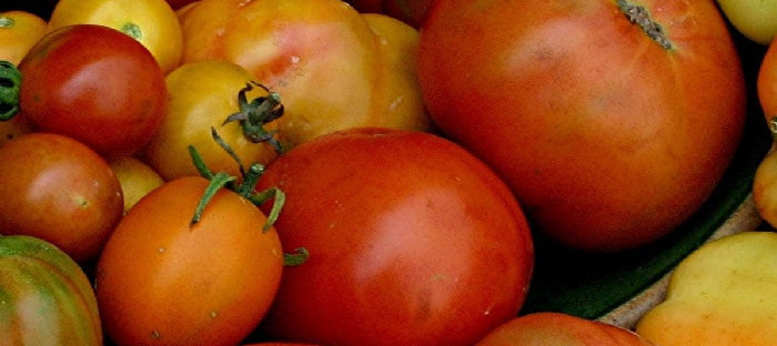 All colors, shapes and sizes of tomatoes