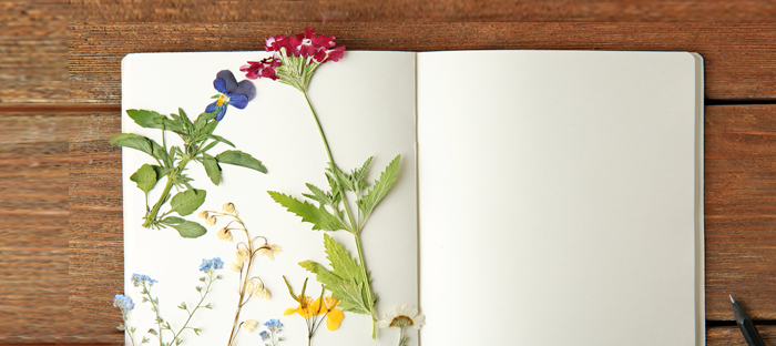 Pressed flower stems and petals in an open blank book