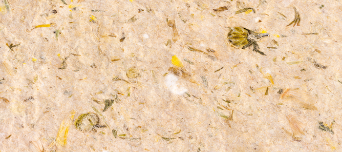 Textured beige paper with seeds and twigs pressed into it