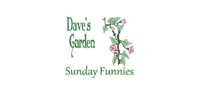 Sunday funnies text logo and vine