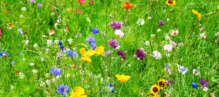 Tall grass field with many differently colored wildflower blooms