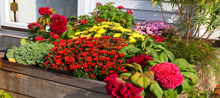 outdoor planter with many different flowering plants