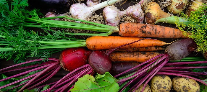 fresh harvested root vegetables