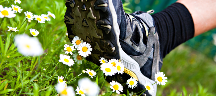 Tennis Shoe Stepping on White Flowers