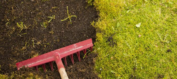 Rake exposing dirt under greenery