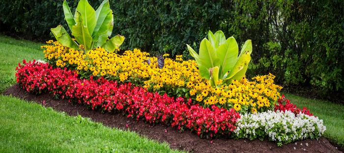 Flower bed on grass