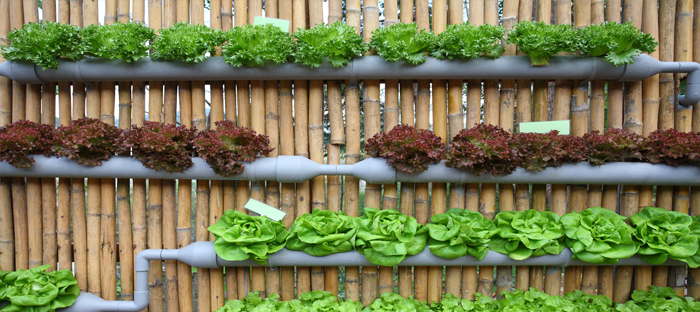 Vertical Wall Garden of Hydroponic Tubes