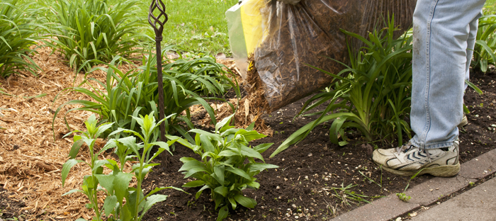 Pouring Mulch Over Garden Plants