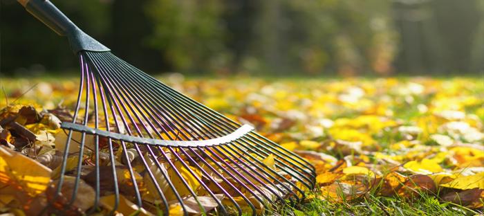 Rake Gathering Leaves