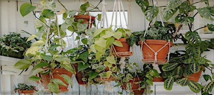 group of hanging plant baskets