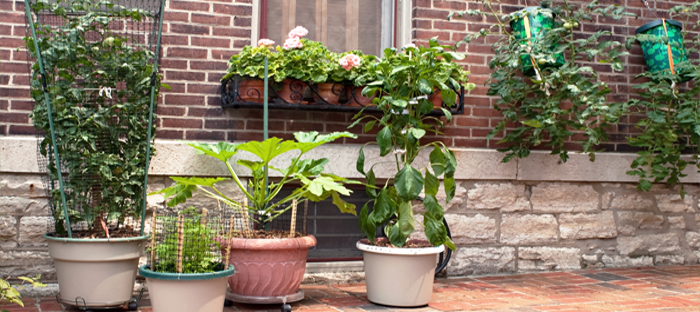 Potted Plants on Patio Next to Home