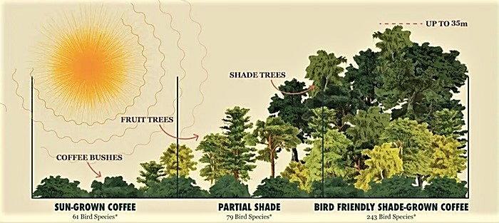 a bird-friendly coffee farm