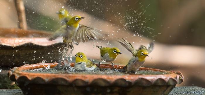 birds at a bird bath