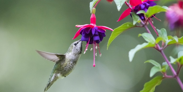 bird with fuchsia