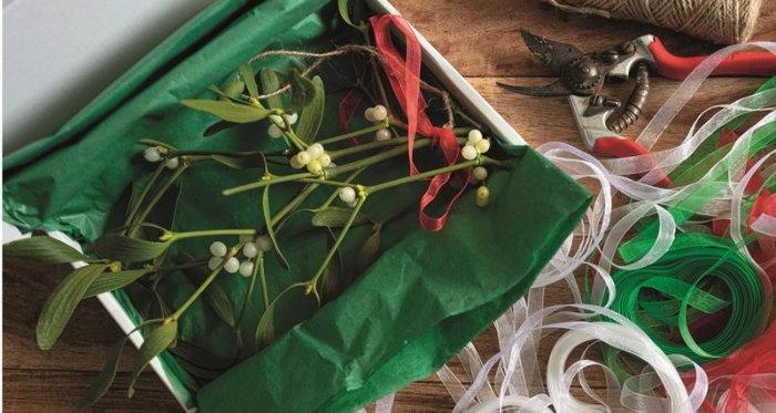 mistletoe in a wrapped box