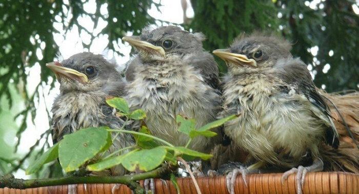 birdfiles