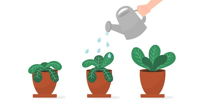watering wilted plants