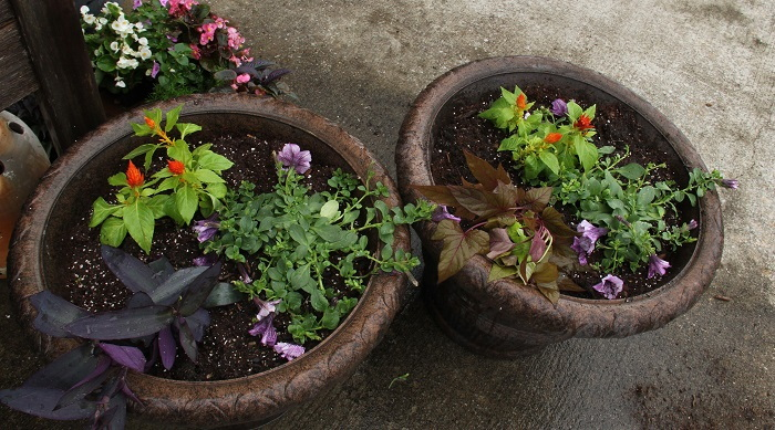 large planters with colorful plants