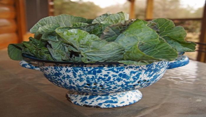 collard greens in colander