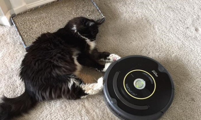 cat playing with roomba