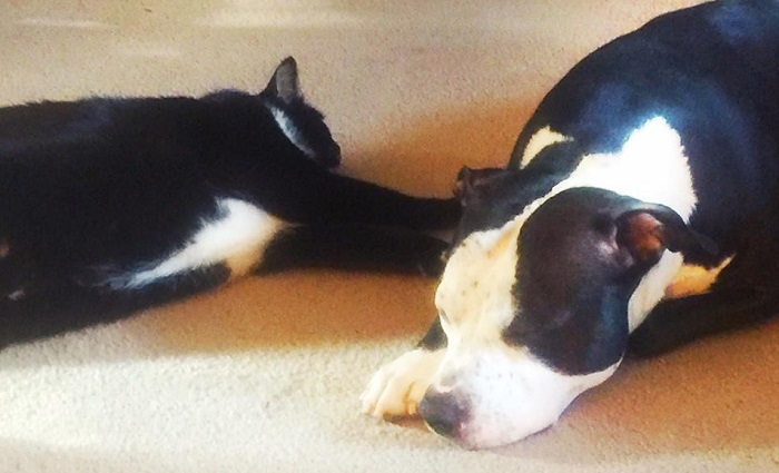 dog and cat laying on floor