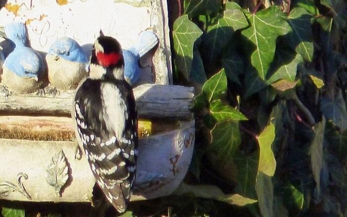 bird sitting on birdbath looking at fake birds