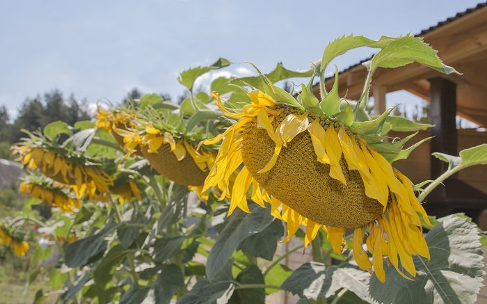 consider planting your flowers in rows or rings to make future planning easier on yourself