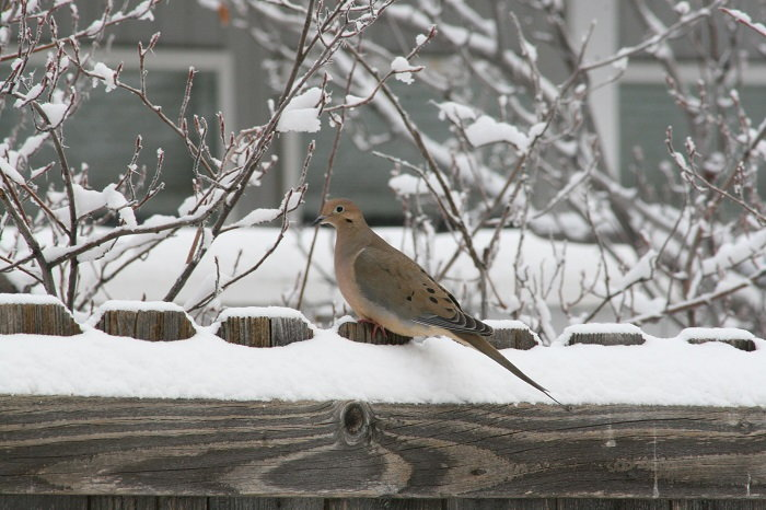birds prefer feeding in areas near dense brush or vegetation