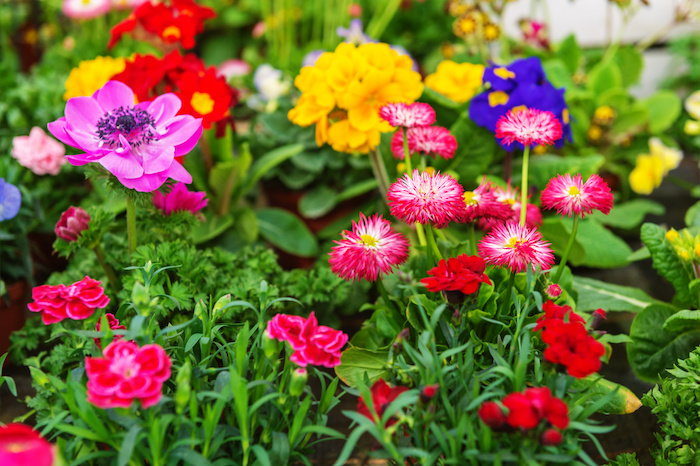 plant a variety of flowers in your garden to attract more pollinators