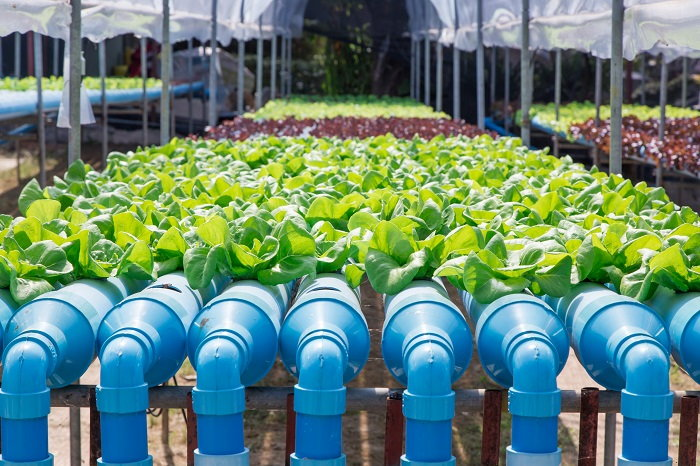 part of an aquaponic system