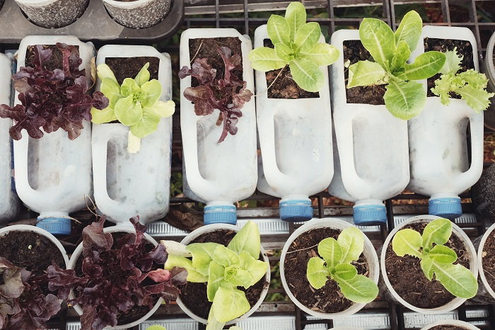 you can start seeds in a number of common plastic containers