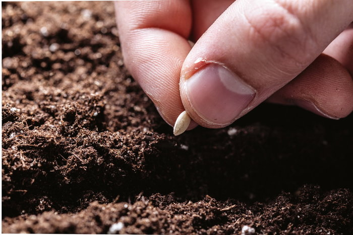 Seed pinched between thumb and forefinger above dirt hole