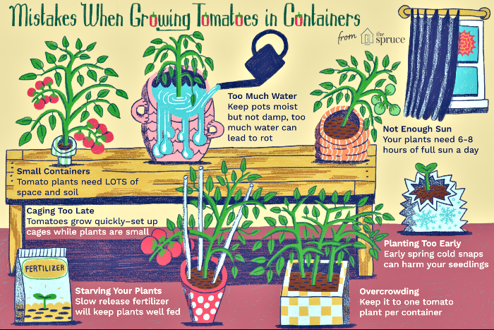 mistakes in growing container tomatoes