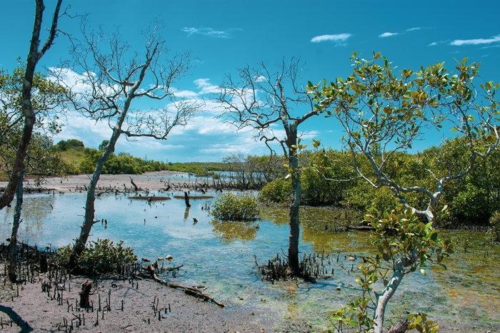 swampy inlet