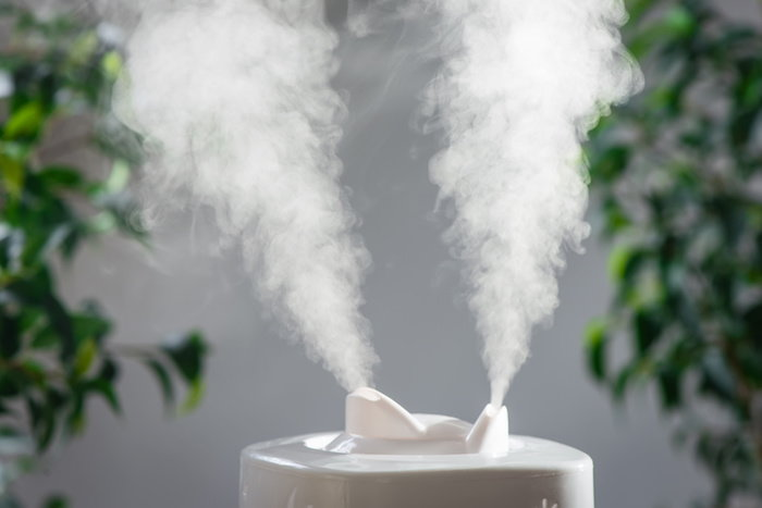 use a humidifier to keep your plants moist in the winter