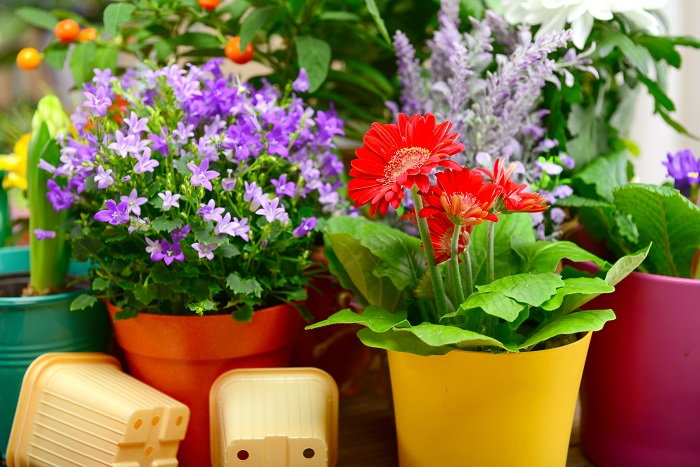 consider which varieties you want to move indoors for the cold season