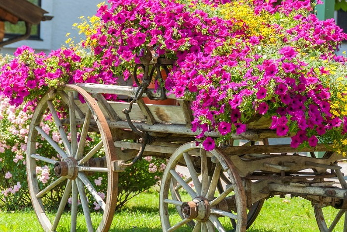 annual flower cart