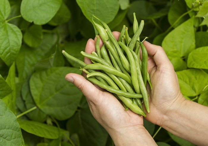 Handful of Pea Pods
