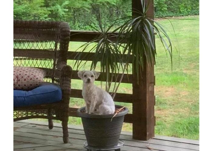 dog in flowerpot