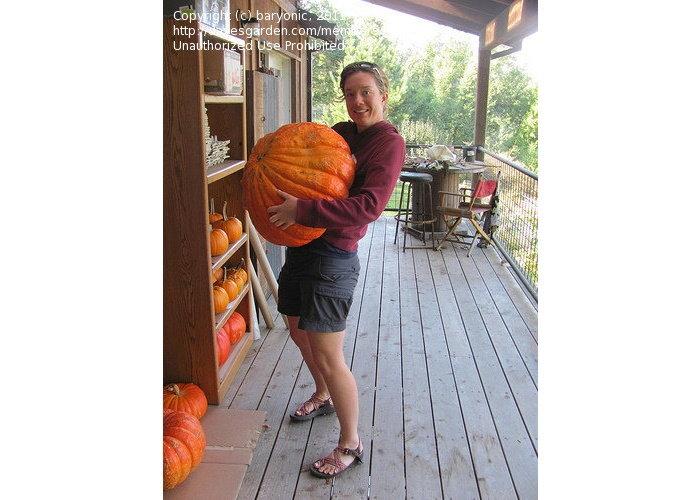 man holding a giant pumpkin